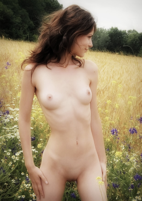 Naked slim girl poses at the cornflower field